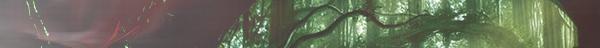 La forêt de Tana