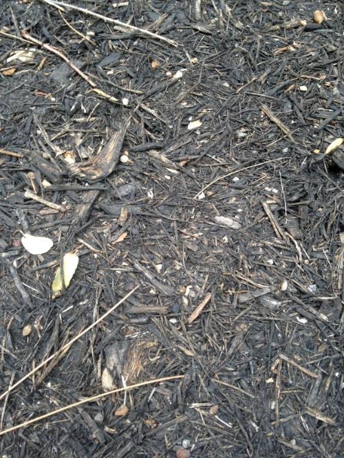 Puppy vomiting black dirt and having diarrhea Bdc8411c-6405-4b01-b9c4-e6ce30b6c05c_zps8d3b80d4