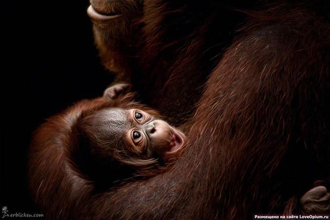 Monos... 3