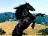 Animales de poder. Th_3-fotos-caballos-g