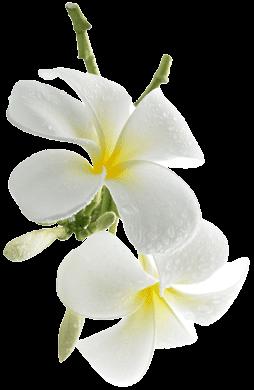 Aromaterapia. Flor