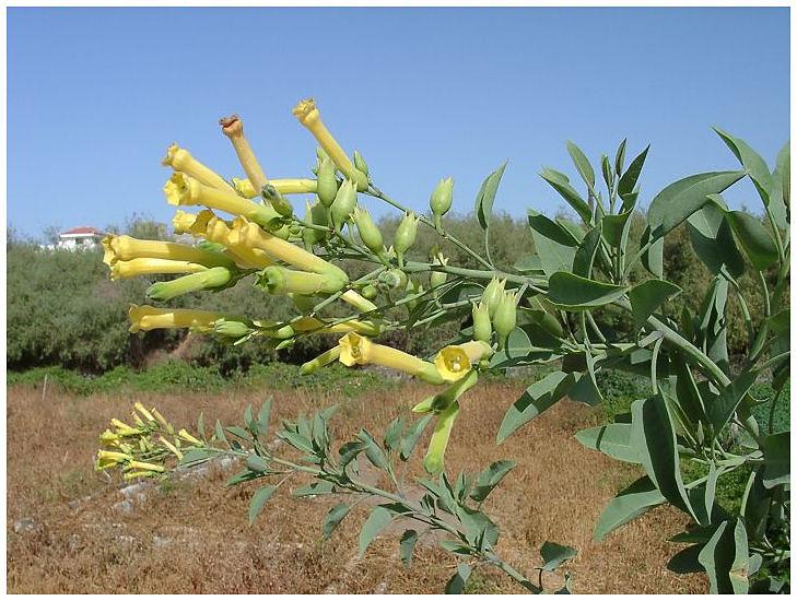 Plantas Peligrosas Palan20palan