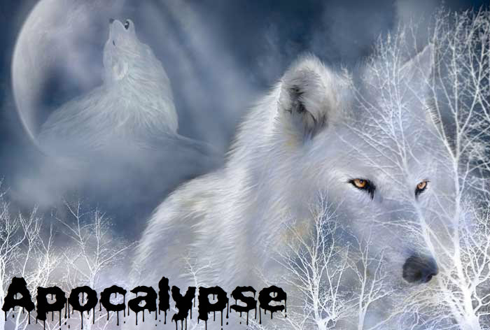 Art Gallery Example!  102_WhiteWolf_Pic-1