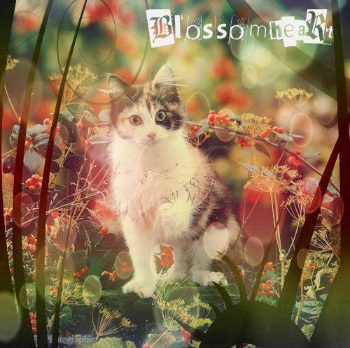 Art Gallery Example!  Blossomheart_zpse51cd0eb
