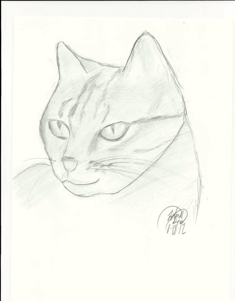 Corruption's Art Gallery Cat-FaceDragoArt