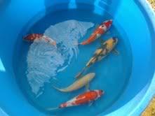Piet's New Fish Piet1