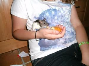Entrego en adopción ratis de una nueva camada ((CERRADO)) 2