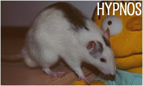 Nolem, Hypnos, Aura, Maya Hypnos