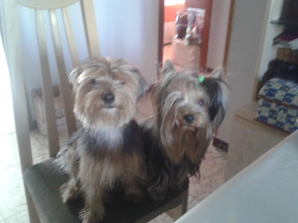 Presentaciones de nuestros perros , ¡Da a conocer a tu amigo perruno! 2011-12-08102947