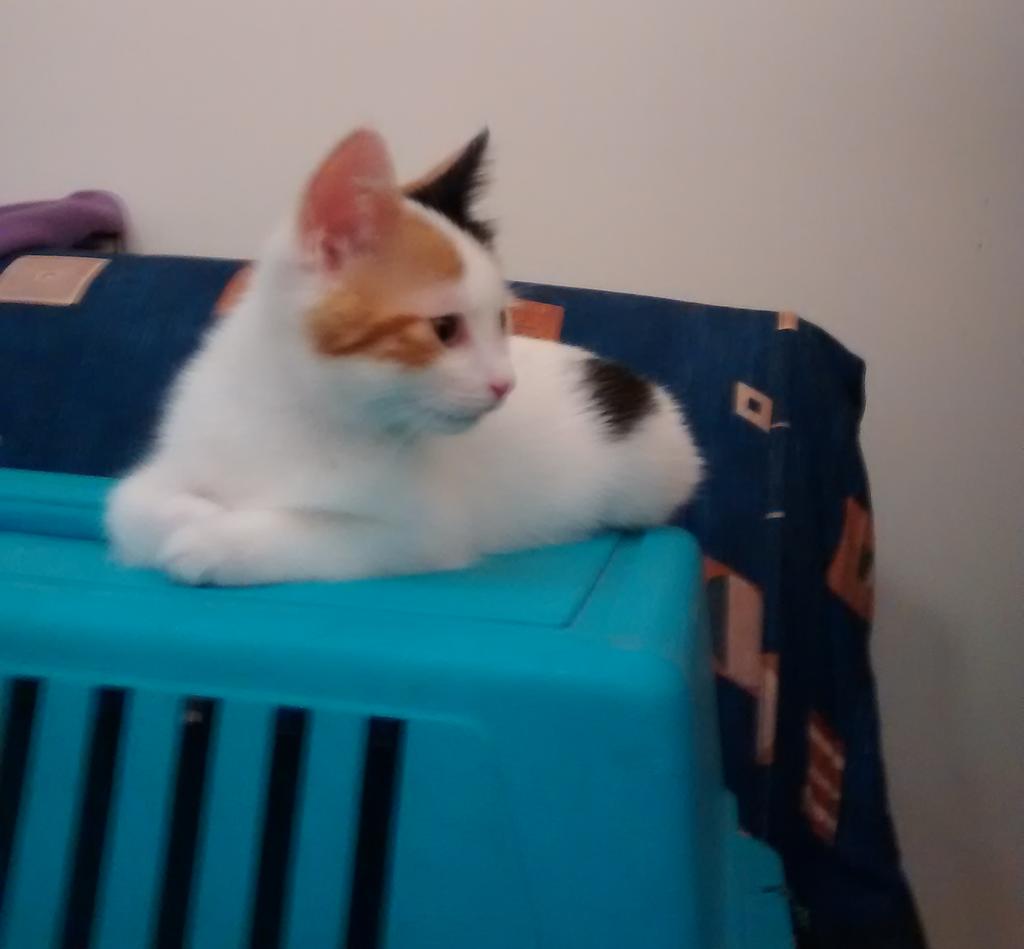 3 μηνών κουκλίτσα, η Λωρίτσα αναζητά ζεστό και καλόκαρδο σπίτι.  Lambdaomegarhotausigmaalpha4_zpswcuawj4u