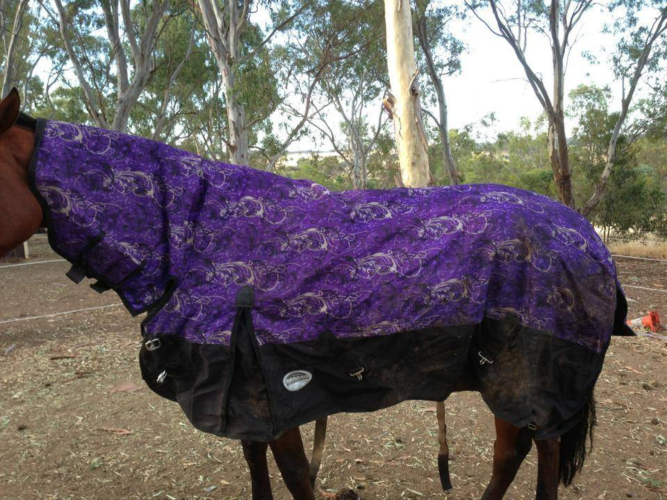 Horse rugs and horse gear!! 25979_10151342948788624_1401864542_n_zpsc62bd6b2