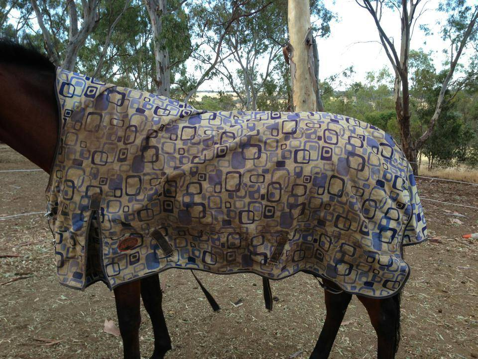 Horse rugs and horse gear!! 379364_10151342950873624_662174374_n_zps81f58710