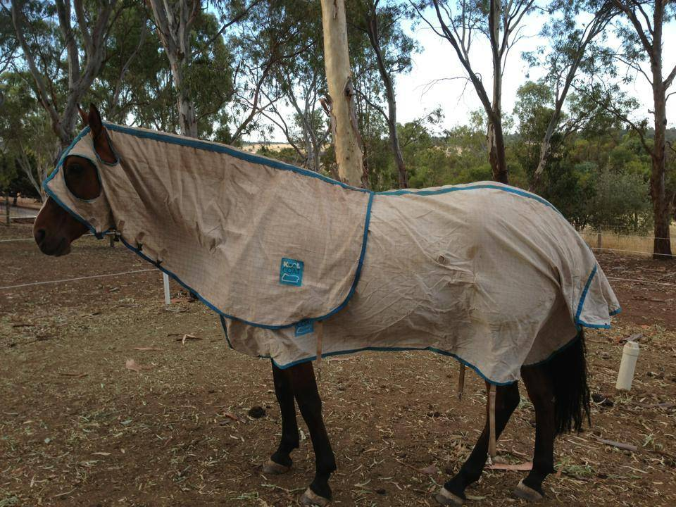 Horse rugs and horse gear!! 394875_10151342949848624_447240348_n_zps6b162b68
