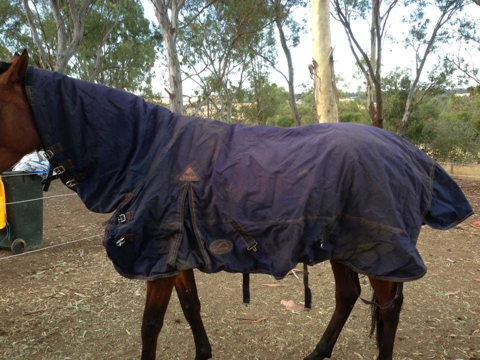 Horse rugs and horse gear!! 395408_10151342948988624_304964806_n_zps061b2196