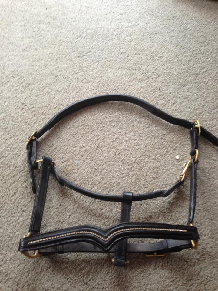 Horse rugs and horse gear!! 544057_10151335575373624_93986253_n_zpsedda6ee2