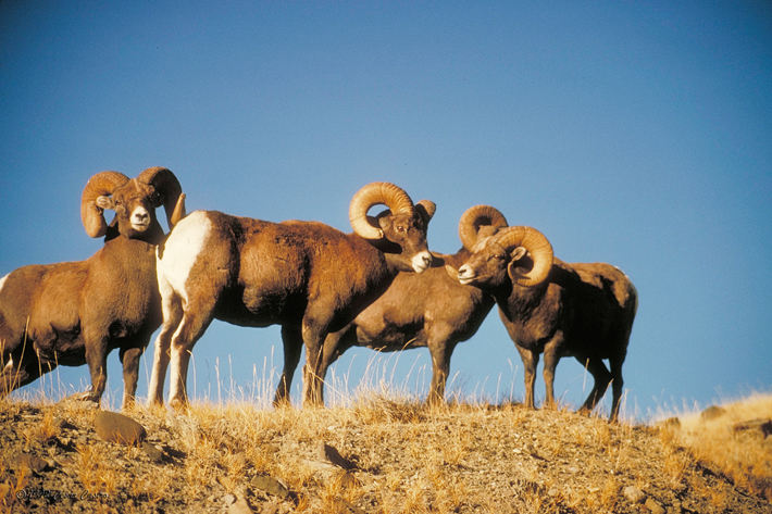 parque nacional:sierra de san pedro martir 50-Cimarron_168052_zps0561aba6