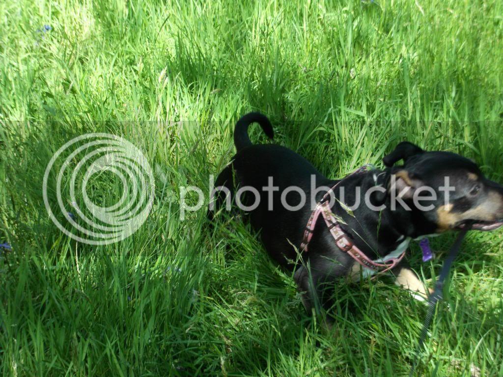 Iza in the grass. 014_zps80929020