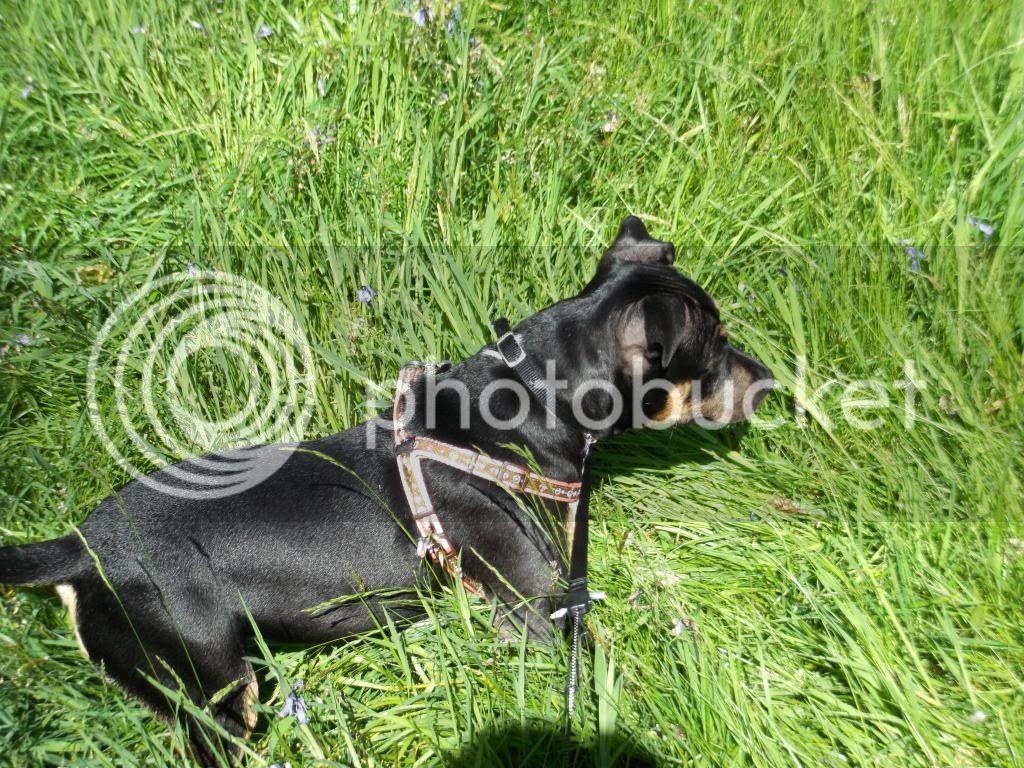 Iza in the grass. 016_zps9dc16ff1