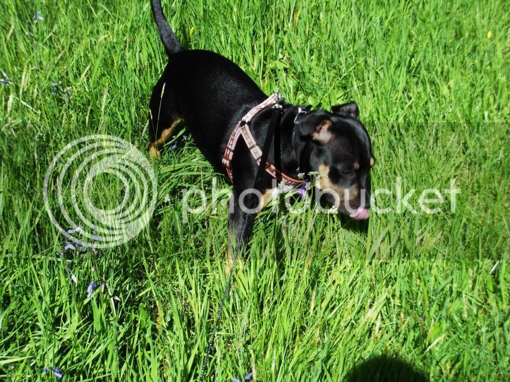 Iza in the grass. 018_zpsa47d4a75