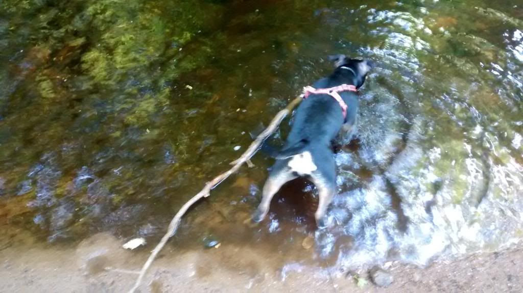 Dip in the river IMG_20140618_175423938_zpsyanwvu6p