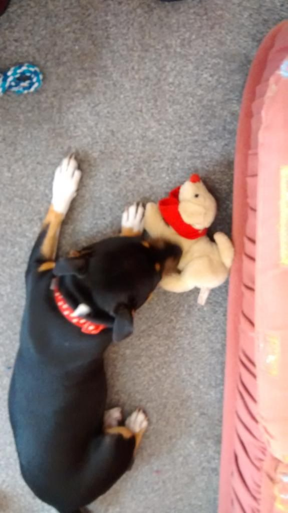 Rescued a dog for Iza IMG_20140722_124208850_zps04740rsu
