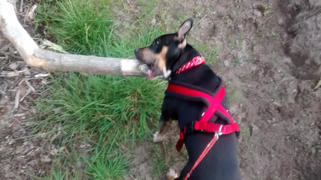 Iza's moved up to the big sticks now. IMG_20140913_184330528_zps2dqhqgmb