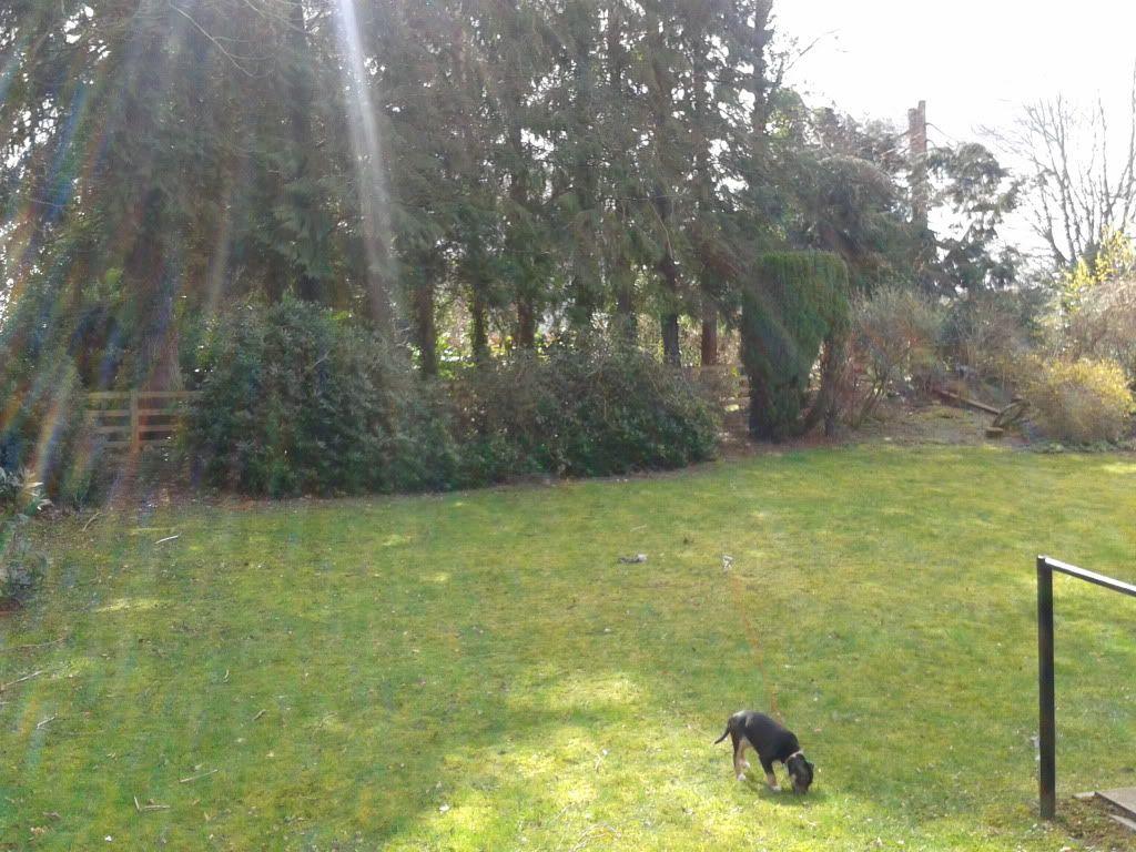 Garden play time. 2014-03-23122450_zps5c6f650c
