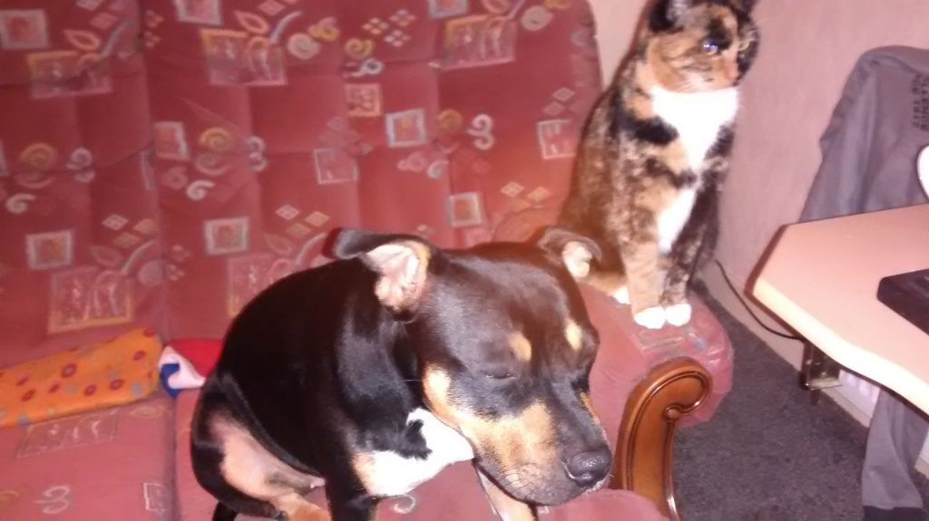 cat and dog ganging up on me. IMG_20141221_201730126_zpsd83a83c7