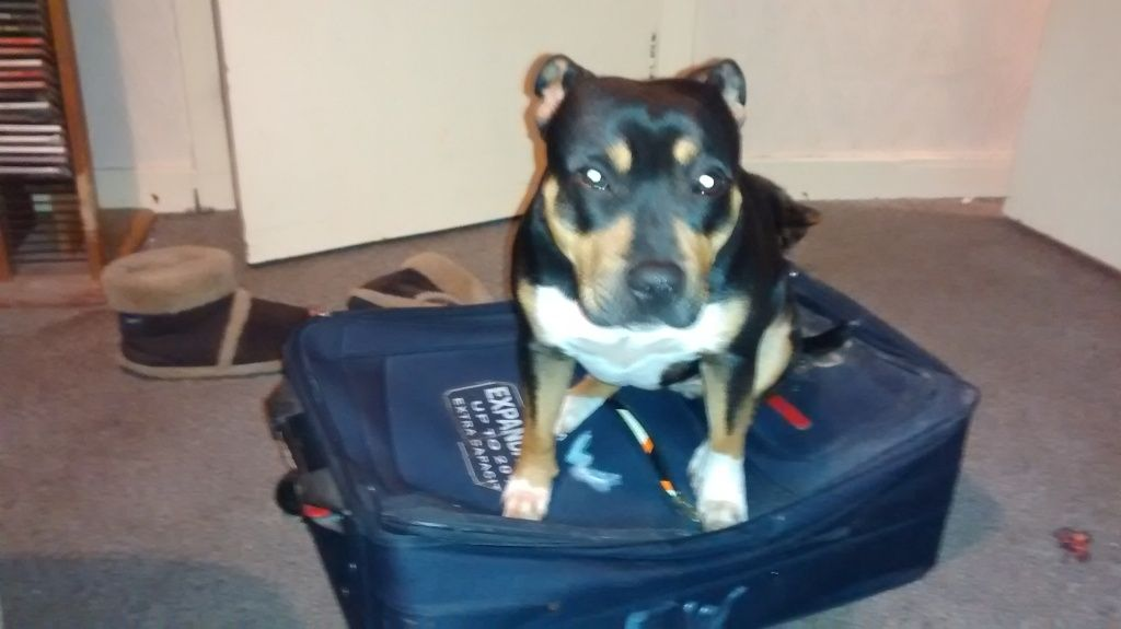Iza's all packed. IMG_20150224_190859864_zps51d5ef07