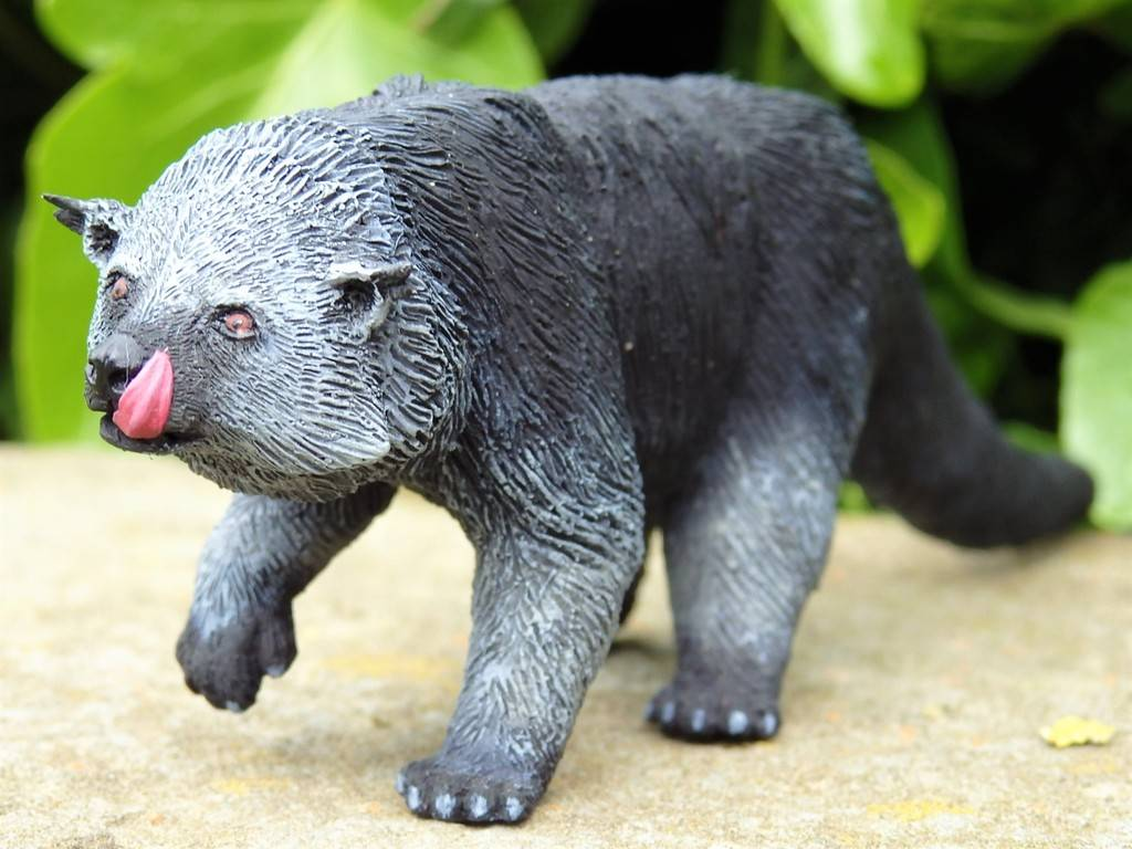 A lovely guy is arrived at home - 1:10 scale resin binturong from Arborium studio !  P5190299%202_zpsf7hv3tbm