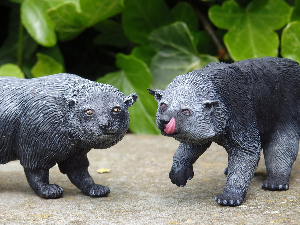 A lovely guy is arrived at home - 1:10 scale resin binturong from Arborium studio !  P5190307_zpsbkbc0en7
