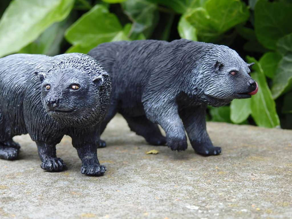 A lovely guy is arrived at home - 1:10 scale resin binturong from Arborium studio !  P5190308_zpsuvh5gkg4