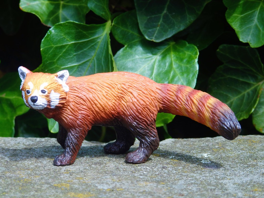 Walk around of the new 2016 Bullyland RED PANDA :)  P7080049%202_zps132j4vmc