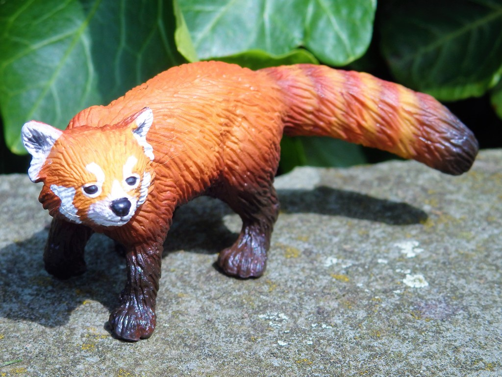 Walk around of the new 2016 Bullyland RED PANDA :)  P7080059%202_zpsawwtkjds