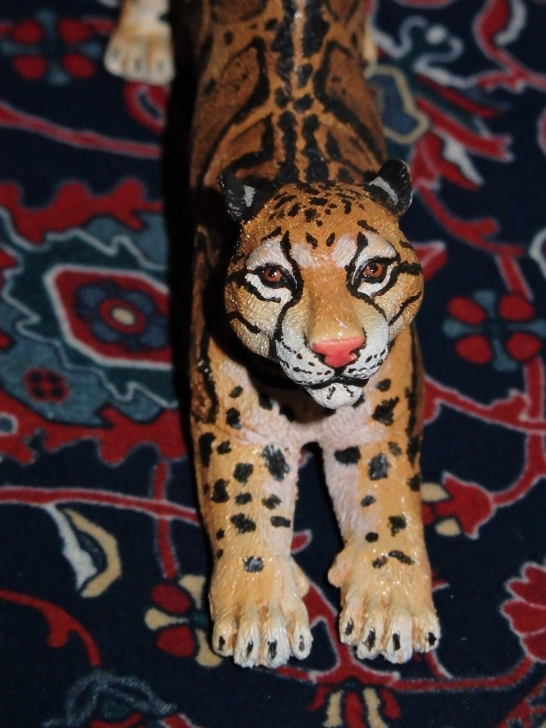 1:10 clouded leopard made by Arborium : a few pictures :)  PC130075%202_zpsjhqwtouy