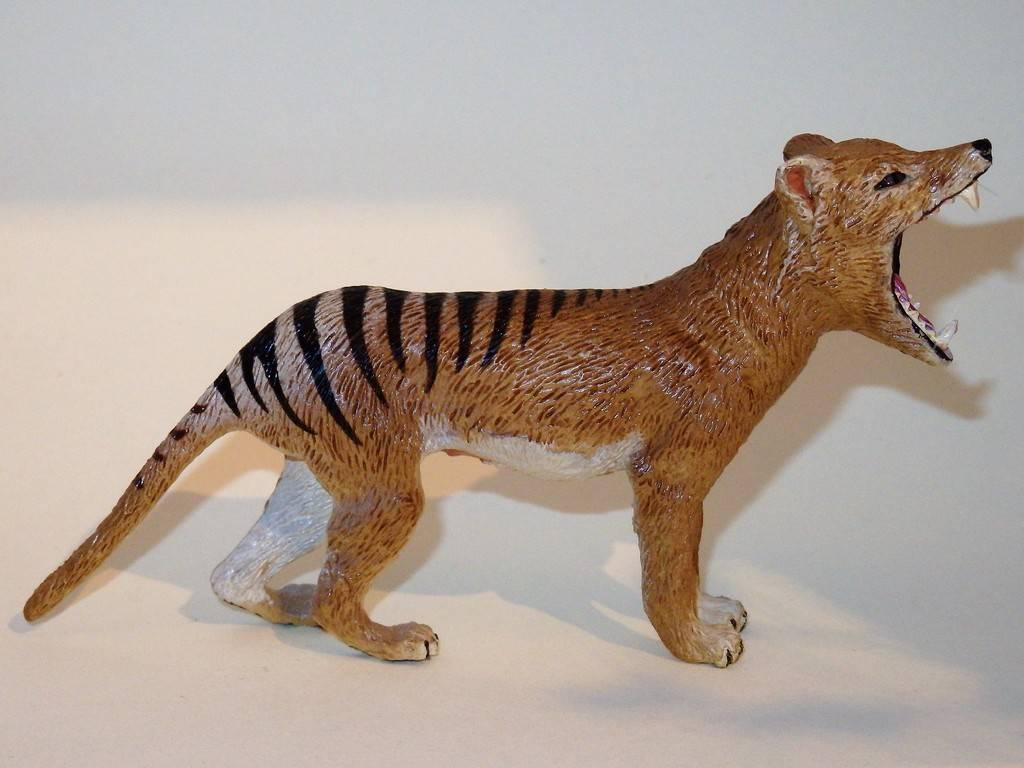 My Southlands models are arrived : Thylacoleo and Thylacine :)  PC140121%202_zpshswmw6gb