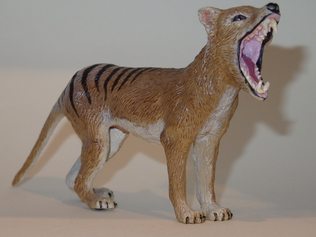 My Southlands models are arrived : Thylacoleo and Thylacine :)  PC140124_zps99xvduqg