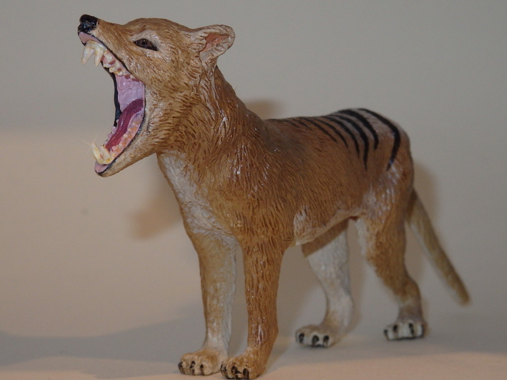 My Southlands models are arrived : Thylacoleo and Thylacine :)  PC140126_zpslht5lyec