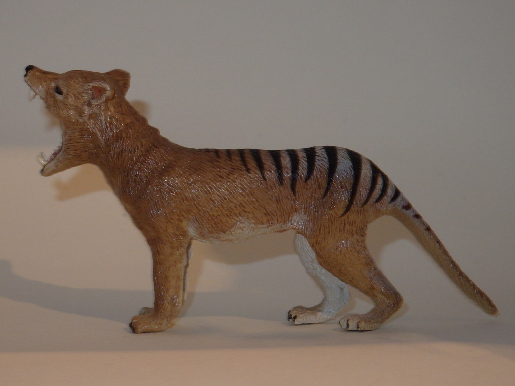 My Southlands models are arrived : Thylacoleo and Thylacine :)  PC140128_zpszpkfznwc