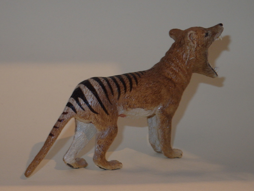 My Southlands models are arrived : Thylacoleo and Thylacine :)  PC140129_zpsprgsauhk