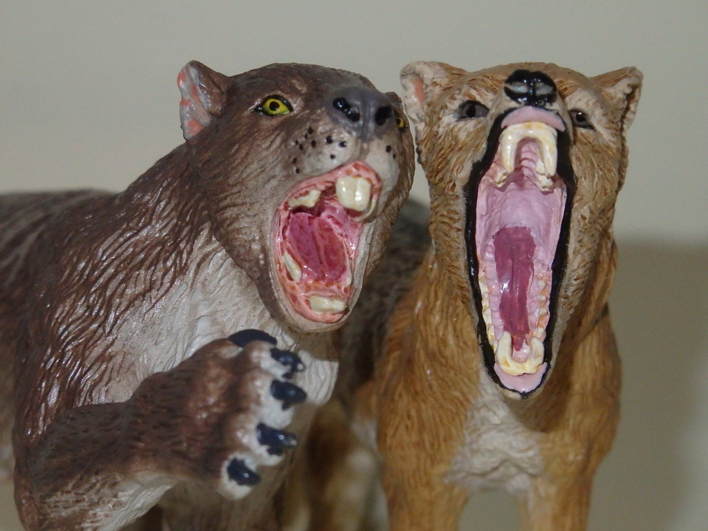 My Southlands models are arrived : Thylacoleo and Thylacine :)  PC140132_zpsjlk0exbx