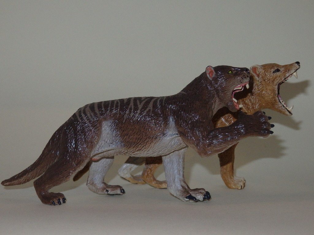 My Southlands models are arrived : Thylacoleo and Thylacine :)  PC140133_zpsjc8mppmn