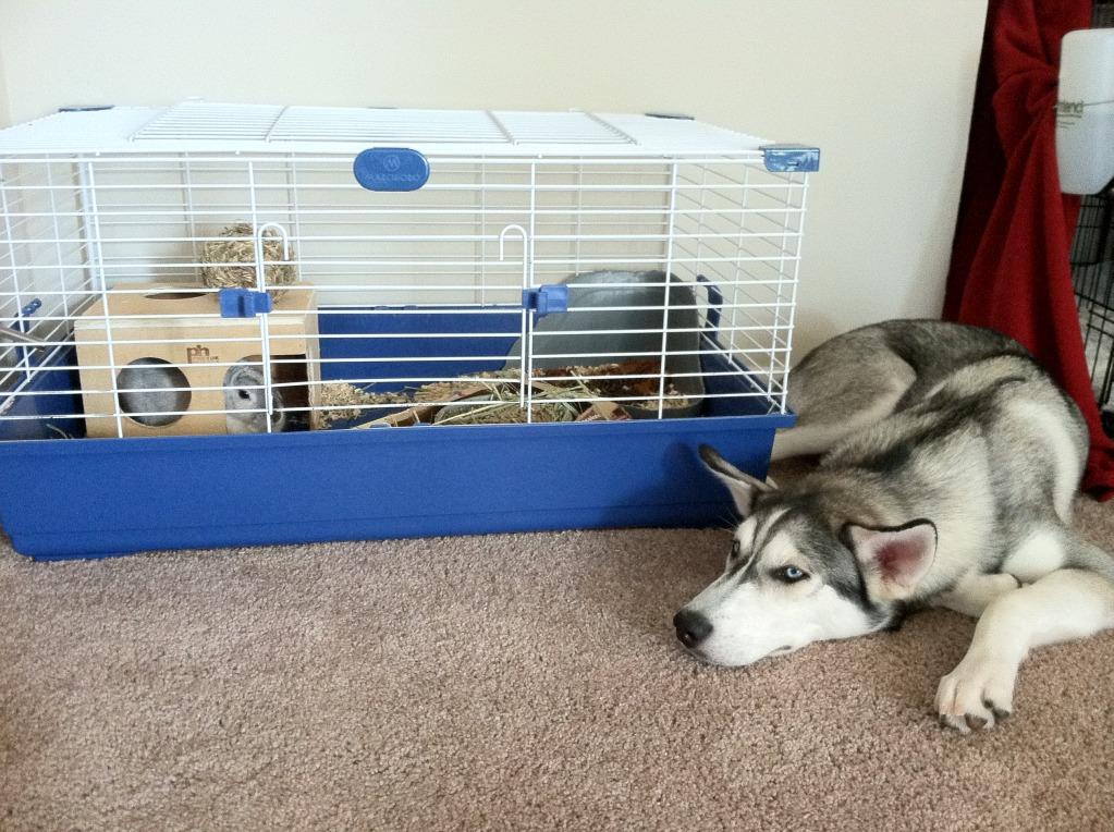 Ezio and Gimli the bunny! Sleepybabies