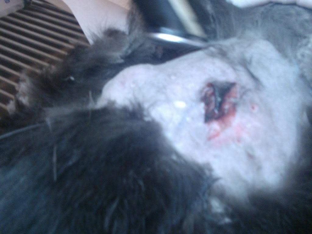 Δαγκωσε τον Domino σκυλος!!! WP_000631