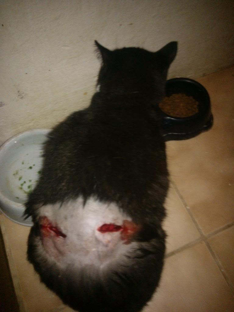 Δαγκωσε τον Domino σκυλος!!! WP_000635