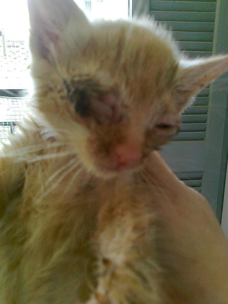Mισοτυφλο μωρο γατακι... - Σελίδα 2 1854