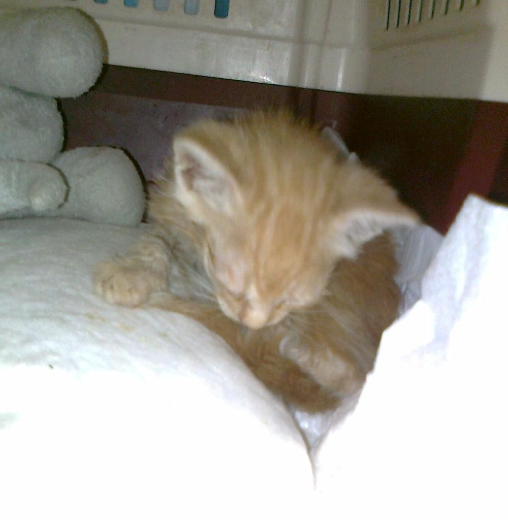 Mισοτυφλο μωρο γατακι... 1872_001