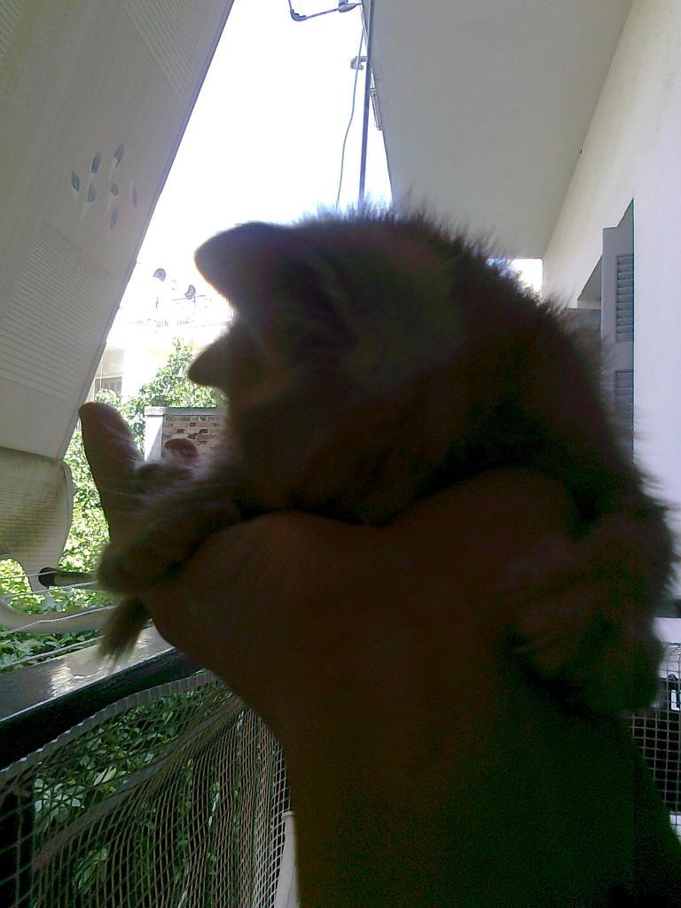 Mισοτυφλο μωρο γατακι... - Σελίδα 2 1875