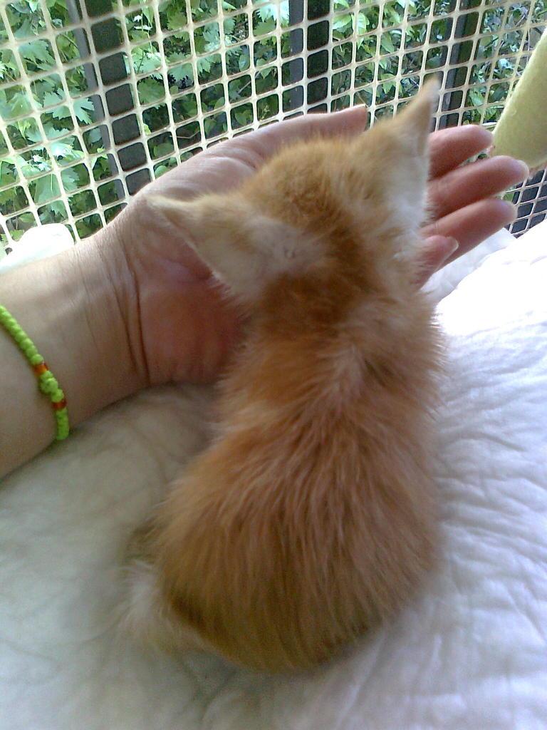 Mισοτυφλο μωρο γατακι... - Σελίδα 2 1876