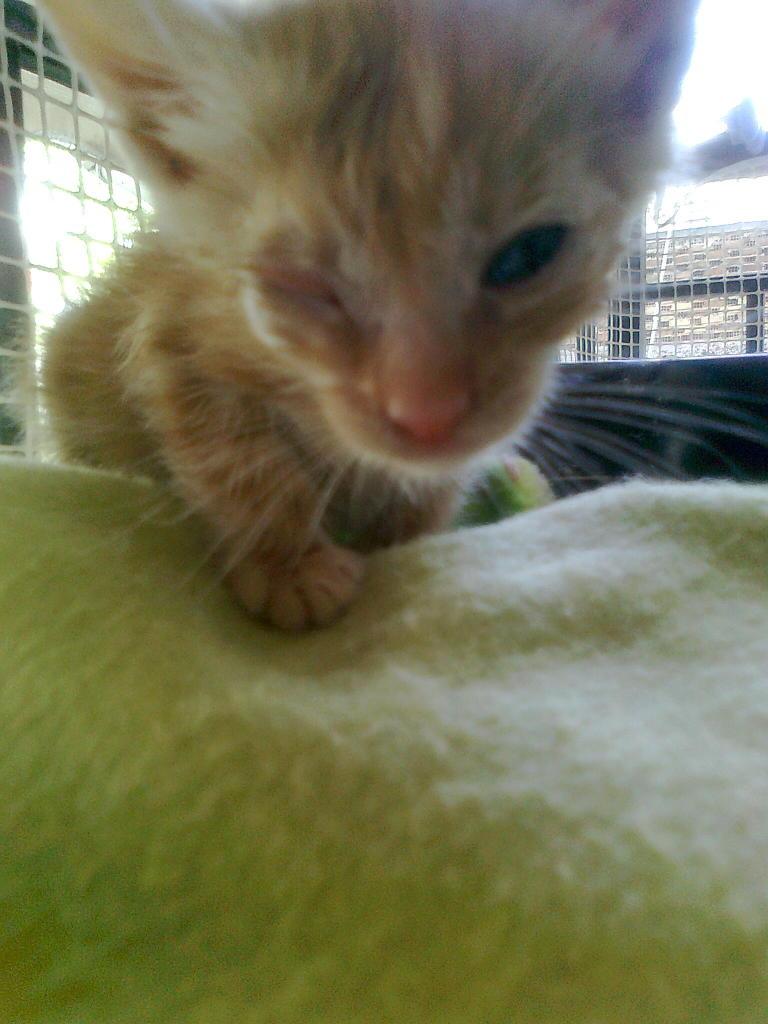 Mισοτυφλο μωρο γατακι... - Σελίδα 2 1880